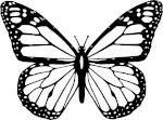 butterfly - renew